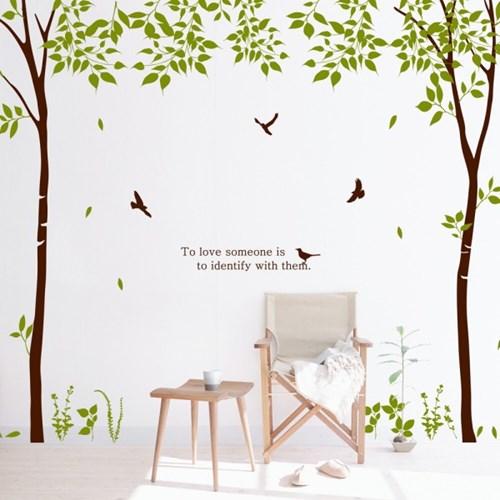 dc101-숲속의 멜로디_자작나무