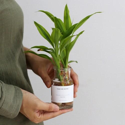 take me home 산데리아 (수경재배) 식물 화병 세트