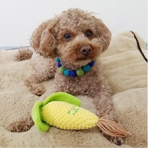 [PetToy] Love Pets Corn(옥수수)