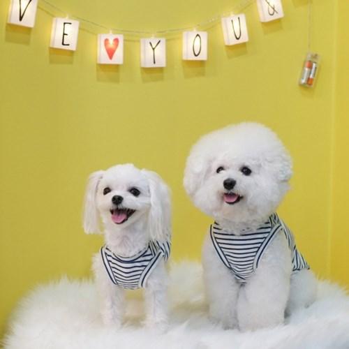 [텐텐클래스] (청주) 핸드메이드 강아지 옷&소품(초급,중급4,5회)