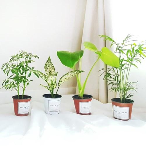 실내공기정화식물 화분세트 기획전 - 홍콩야자,테이블야자,아이비