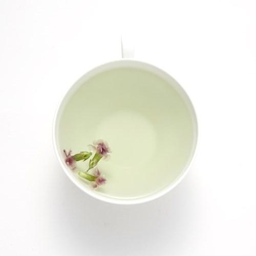채온 꽃차 카네이션꽃차