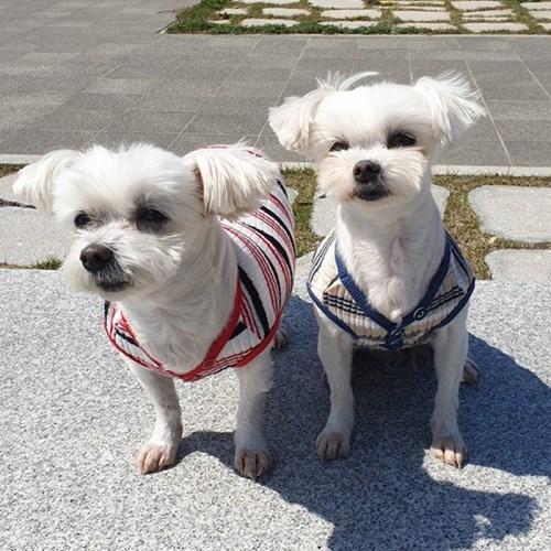 3버튼 티셔츠 강아지옷 편안한 면티셔츠 애견실내복