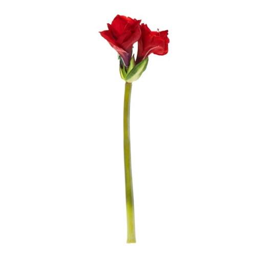 [모던하우스] 아마릴리스 53cm 레드 플로랄 S