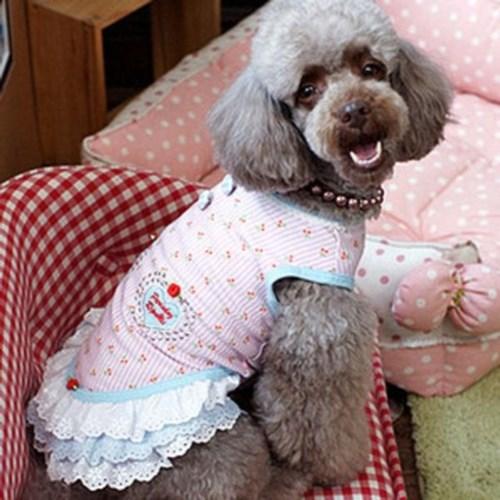 애견 애완견 드레스 원피스 특이한 예쁜 강아지옷