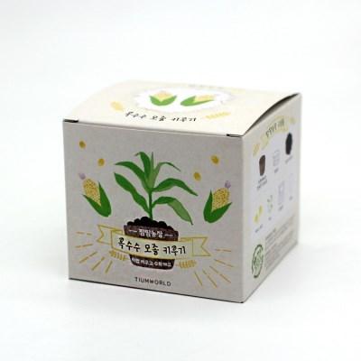팜팜농장_옥수수 모종키우기