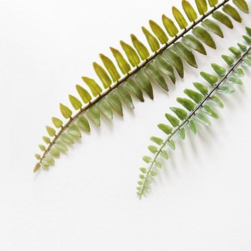트로피칼 leaf