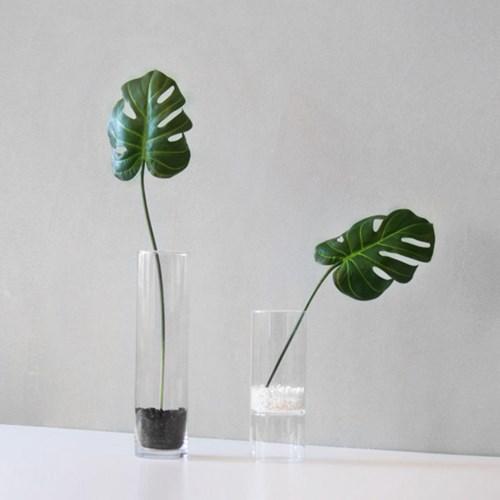몬스테라 leaf