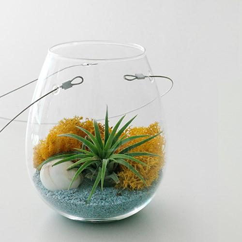 천연 이끼(스칸디아 모스)25g