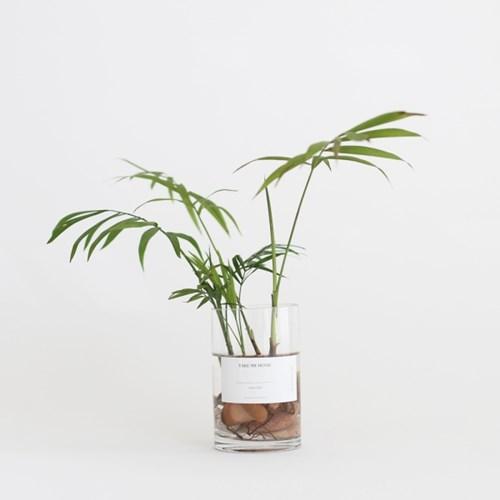 take me home 테이블야자 (수경재배) 식물 화병 세트