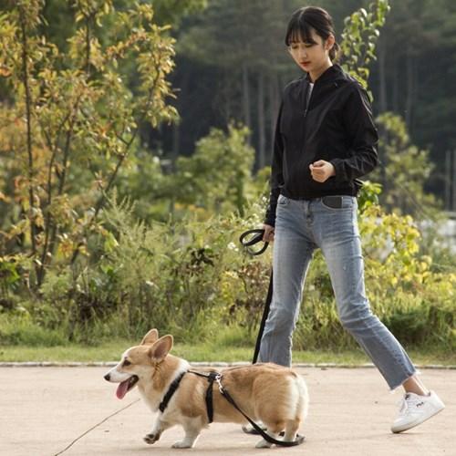 H489 강아지 리드줄
