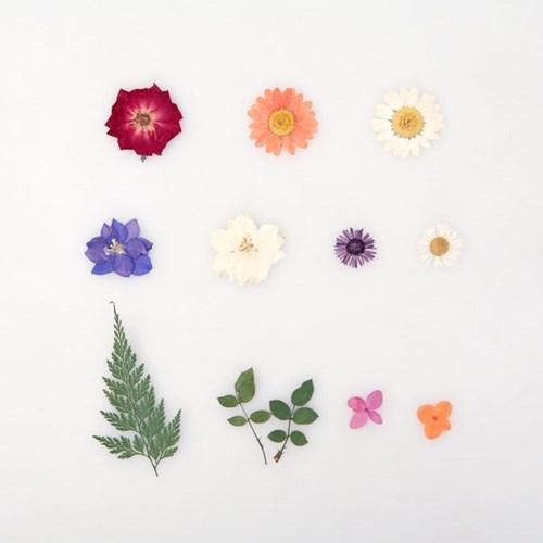 [압화 꽃모음 - A타입] 미니장미 꽃모음