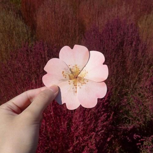 들장미 카드 Wild rose card