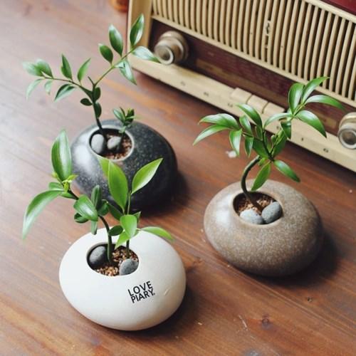 조약돌에 피어난 죽백 미니화분 수경재배식물