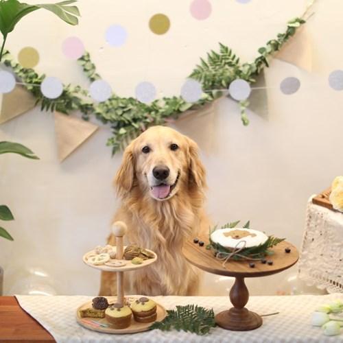 [그냥,점례] 너를 그린 강아지 생일케이크(중)