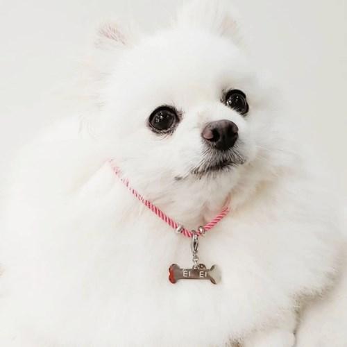 뼈다귀 강아지 인식표 키고리
