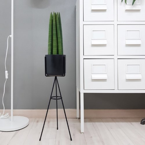 Vivaldi 공기정화식물 + 블랙컬러 철재화분스탠드