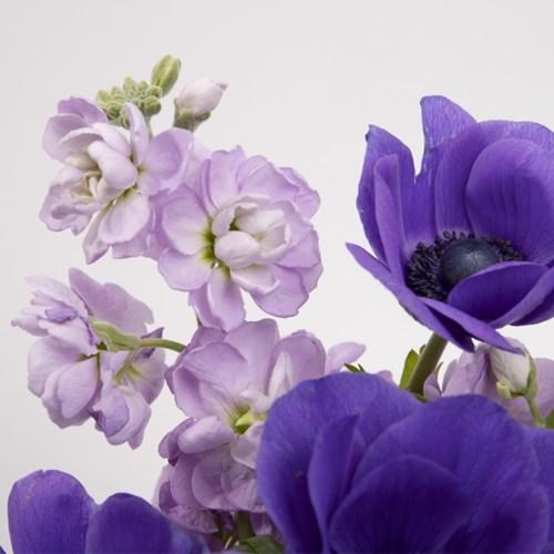 퍼플 스토크 꽃다발 (생화, 전국택배)