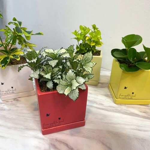 플라랜드 미세먼지 공기정화식물 파스텔 사각 화분 모음