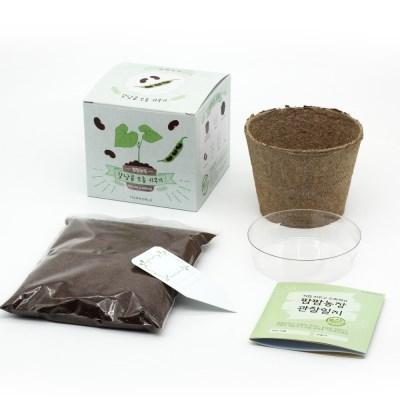 팜팜농장_강낭콩 모종키우기