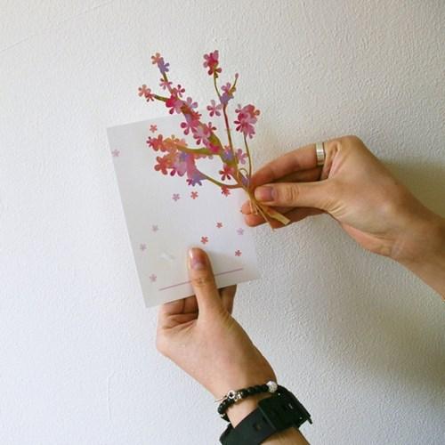 체리블라썸 달달꽃꽂이 카드