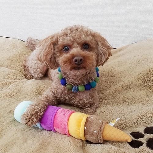 [PetToy]Love Pets Giant Ice Cream (6단빅아이스크림)