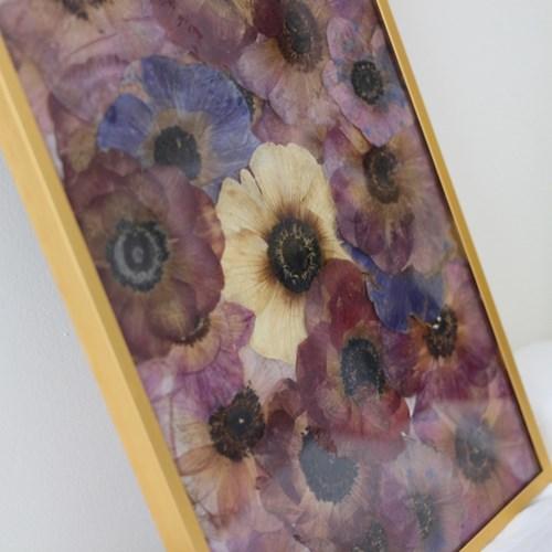 press flower _ anemone / gold frame