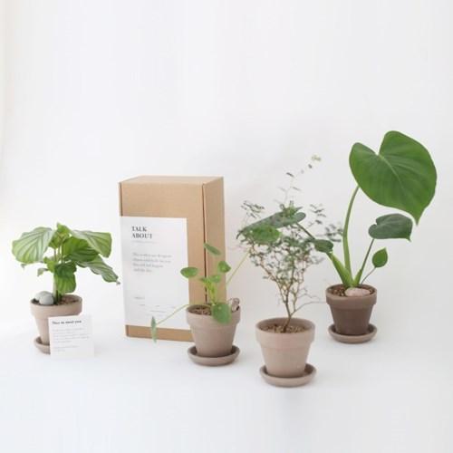 마오리 소포라 토분 DIY