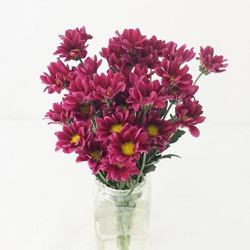 [한정판매] kukka 소확행 꽃다발