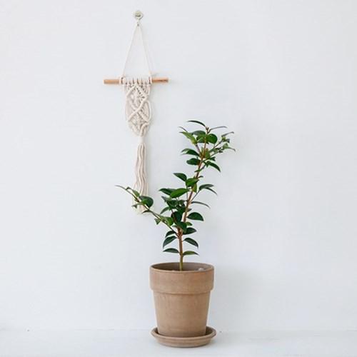 동백나무 토분세트