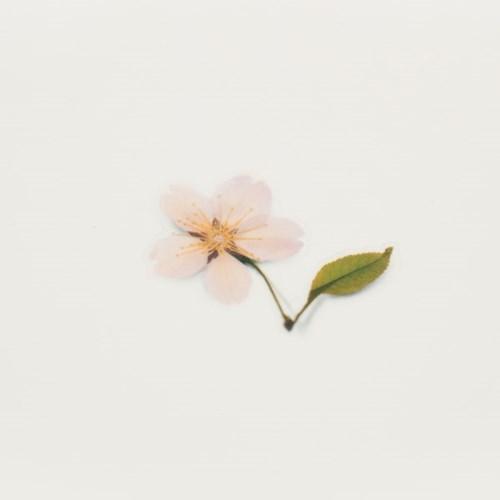 압화스티커_벚꽃