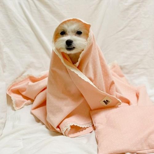 오가닉 도트 꿀잠 사계절 강아지블랭킷 강아지이불 고양이이불