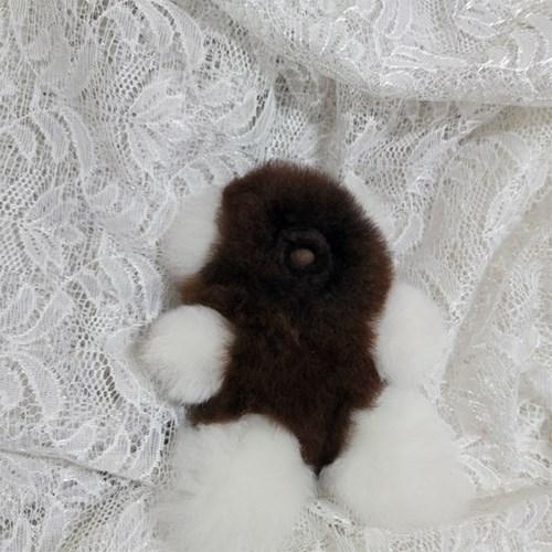[컴발리 알파카] 보들보들 작고 소중한 베이비 곰돌이 인형