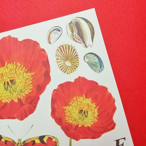 [에코드소울] Paper Sticker - Jardin Red
