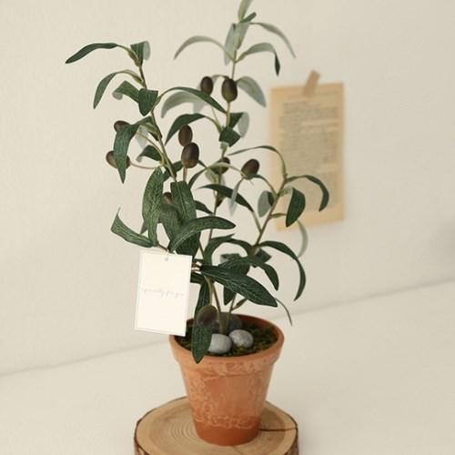 나의 작은 올리브나무_(590020)