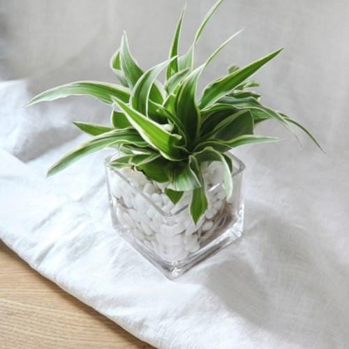 수경재배 식물