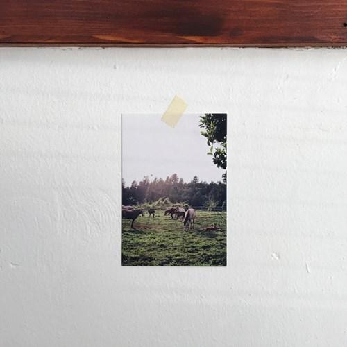 평화로운 제주 풍경 엽서