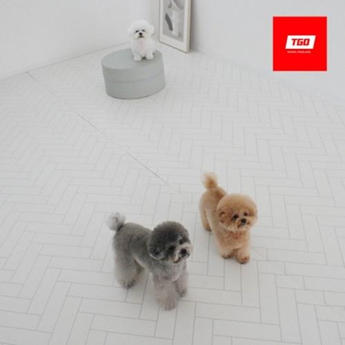 [티지오매트] PVC 강아지매트 개만족매트 / 폭110cm