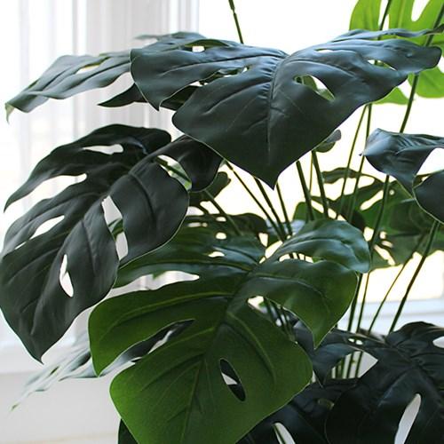 볼륨 몬스테라 블랙 pot(75cm)