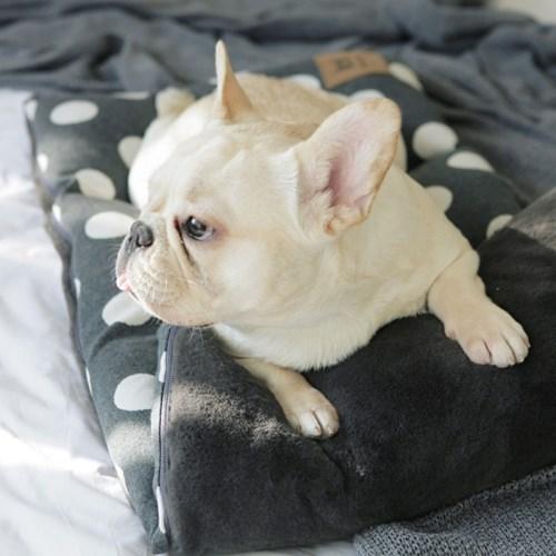 [BORNY PET] 보니펫 4단 멀티방석 달마시안그리드(아이보리)