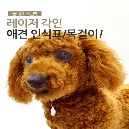 강아지 반려견 대형견 인식표 네임택 올쉐이프 싱글-스트라이프