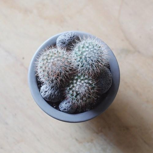 우주선을 타고온 선인장 다육식물 미니화분선물