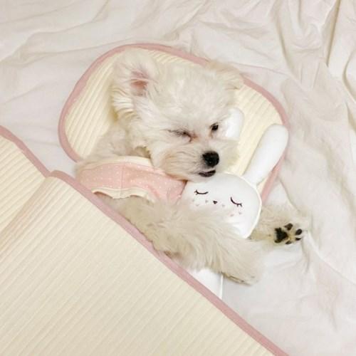 개달당 댕나잇 강아지 고양이 누빔패드 누빔베개 2종SET