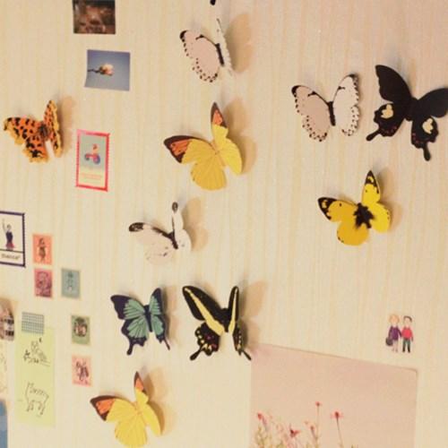 월데코 나비