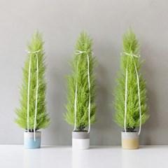 율마 나무