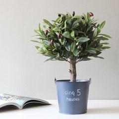 올리브 나무 포트(40cm)