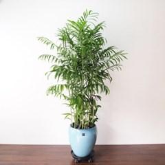 대나무야자