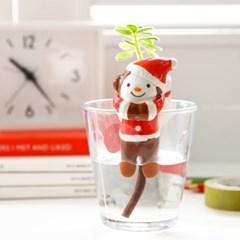 크리스마스 몽이 새싹키우기
