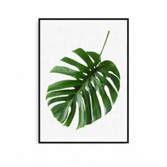 몬스테라 식물그림 인테리어 액자 대형 PALMLEAF