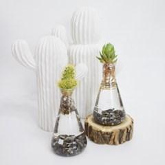 실험관속 초록이(수경재배용)